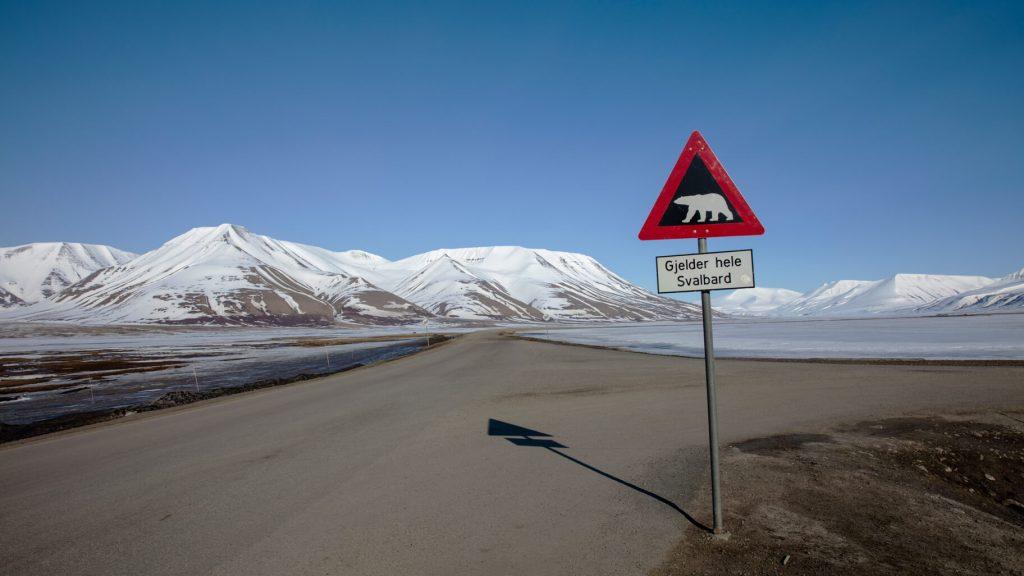 kutup ayısı işareti
