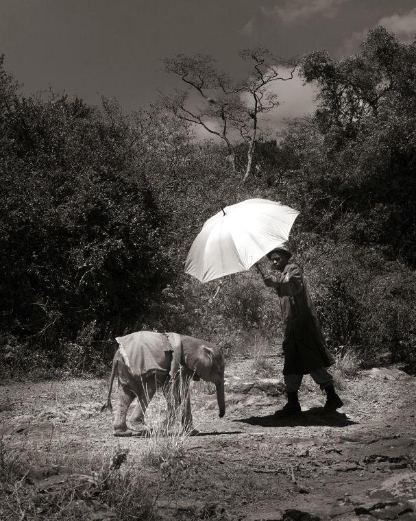 Tanzanya 'nın Vahşi Doğası