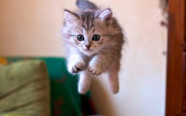 Bu Kedileri Mutlaka İzlemelisiniz! 🤗😸😻