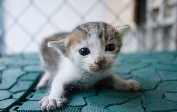 Dünyanın En Sevimli Hayvanları.. 😊😍