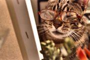 En Tatlı ve Sevimli Kediler 😊😍