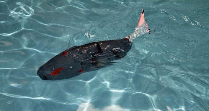 akıllı robot balık