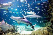 Sea Life İstanbul Ramazan Fırsatı